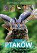 Marchowski Dominik - Atlas ptaków. 250 polskich gatunków (dodruk 2018)