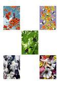 Notes Narciussus Gee My Garden B5
