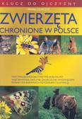 Czapczyk Paweł - Zwierzęta chronione w Polsce