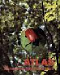 Atlas szkodliwych owadów leśnych