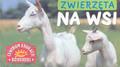 Praca zbiorowa - Zwierzęta na wsi