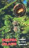 Stocki Jacek - Drzewa iglaste i owady na nich żerujące