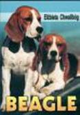 Chwalibóg Elżbieta - Beagle