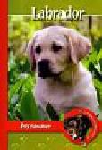 Pol Anna Magdalena - Pika przedstawia Labrador Psy Rasowe