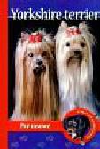 Pol Anna Magdalena - Pika przedstawia Yorkshire Terrier Psy rasowe