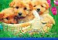 Kalendarz 2009 WL08 Psy rodzinny
