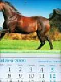 Kalendarz 2010 KT17 Koń trójdzielny