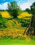 Kalendarz 2010 TW01 Polska trójdzielne 13 kart