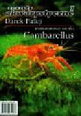 Firlej Darek - Miniaturowe raczki Cambarellus 7