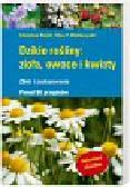 Recht Christine, Wetterwald Max - Dzikie rośliny zioła owoce i kwiaty