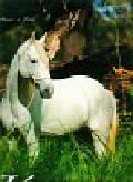 Kalendarz 2011 RW20 Konie w obiektywie