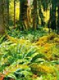 Kalendarz 2011 RW04 Pejzaże leśne