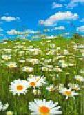 Kalendarz 2011 RW11 Kwiaty w naturze