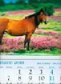 Kalendarz 2011 KT17 Koń trójdzielny