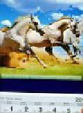 Kalendarz 2011 T 62 Konie
