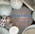 J Iselin - Seashells