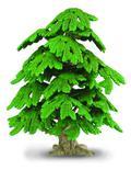 Drzewo Ginko biloba